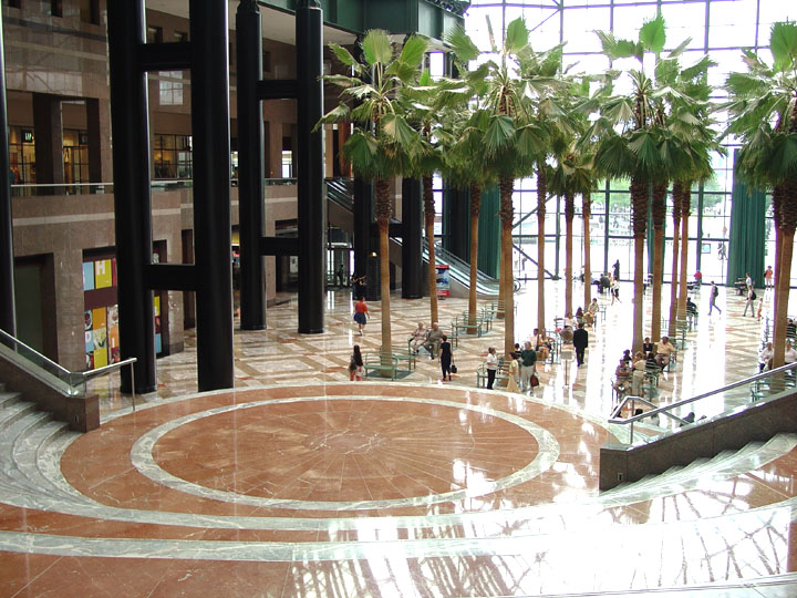 Exclusive Winter Garden Palm Trees Cut Down By Brookfield