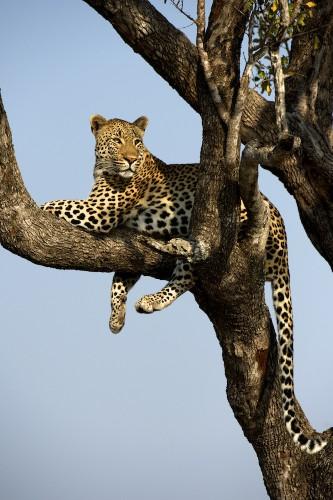 Lion, September 2012, Lonodozi South Africa, by Dr. Chris Attinger