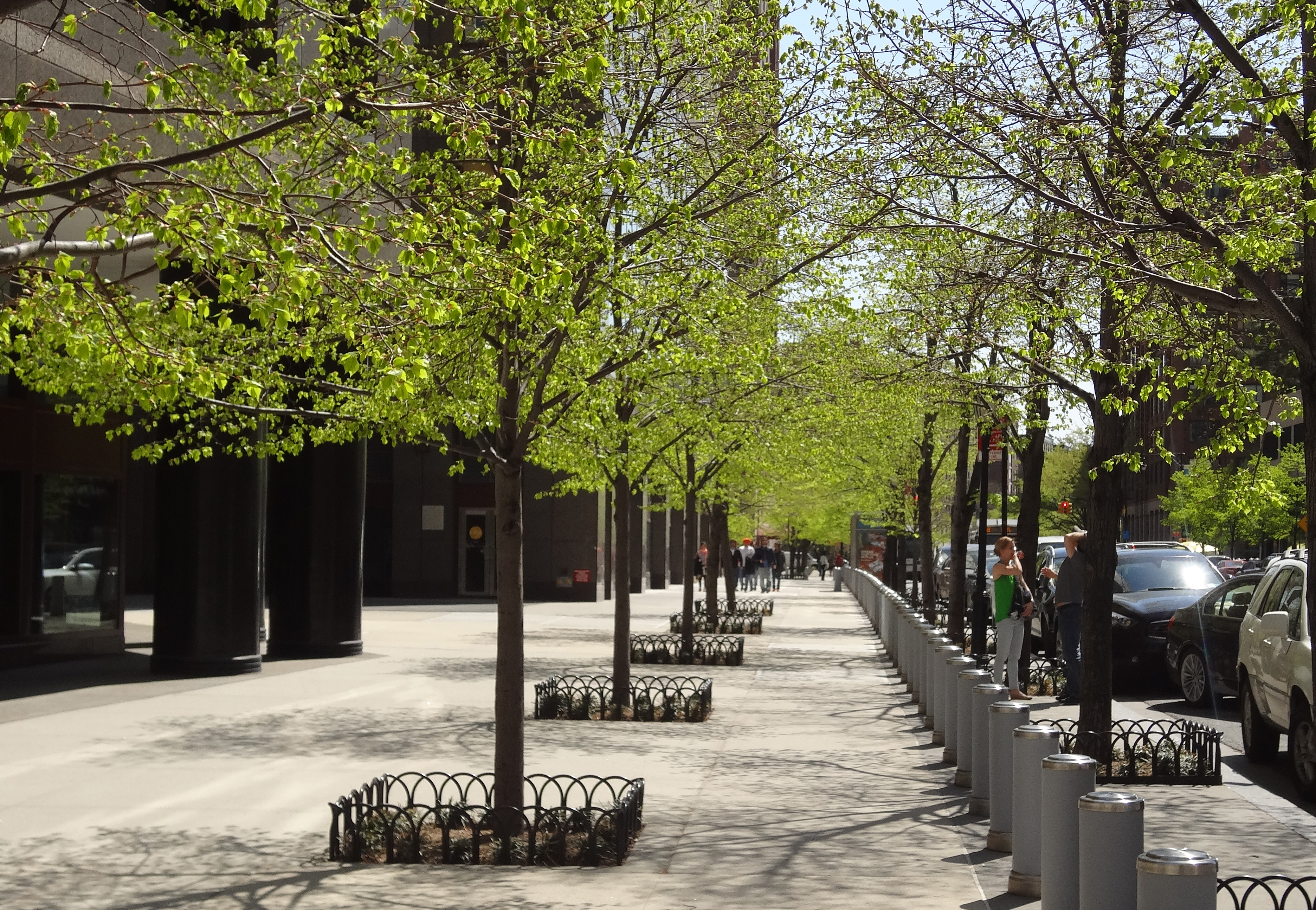 South End trees