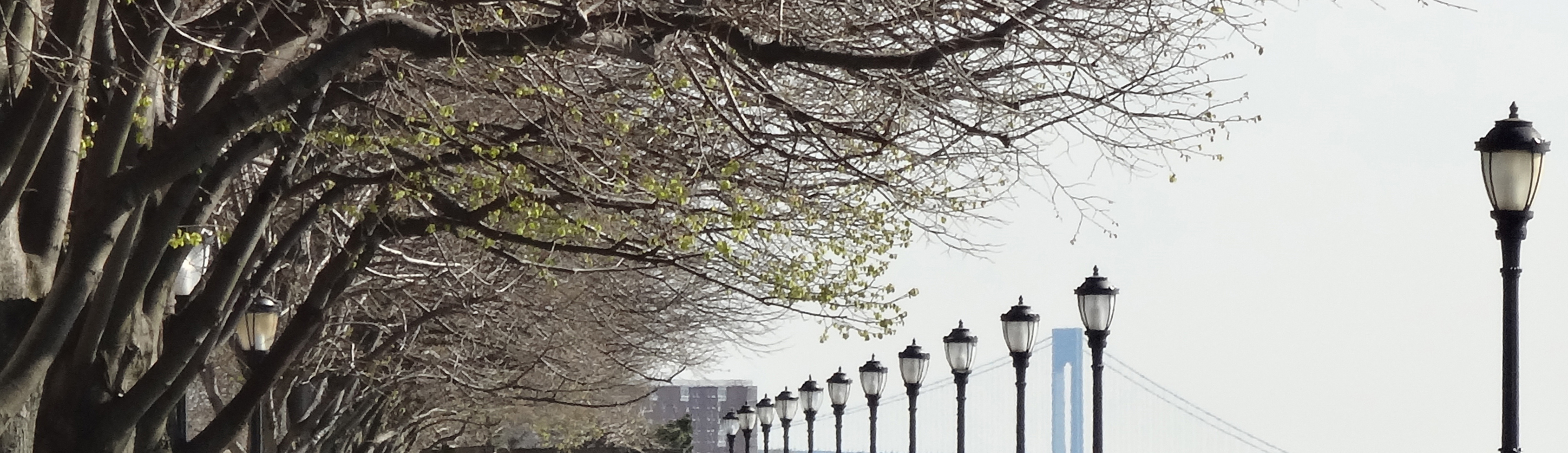 Trees and poles and bridge