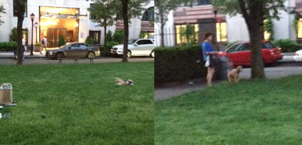 Dogs on rector park