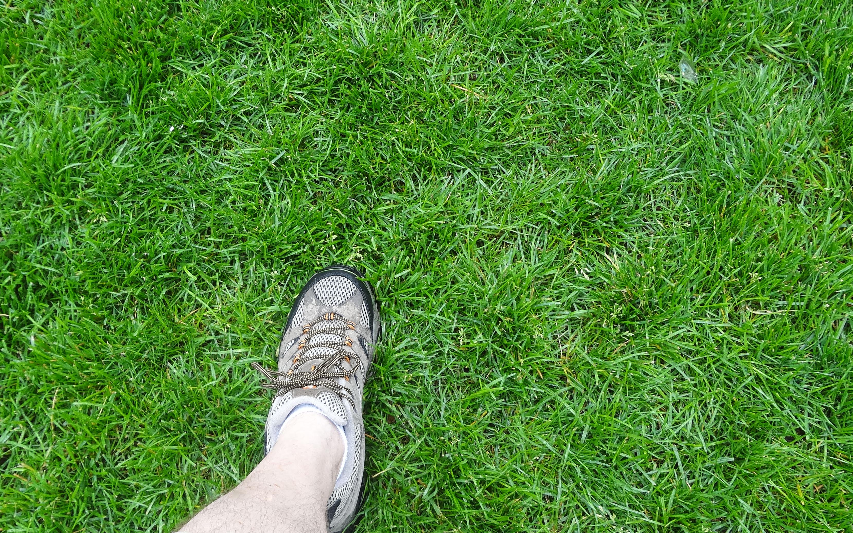 Grass field 5-28-2013