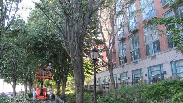 Trees pruned