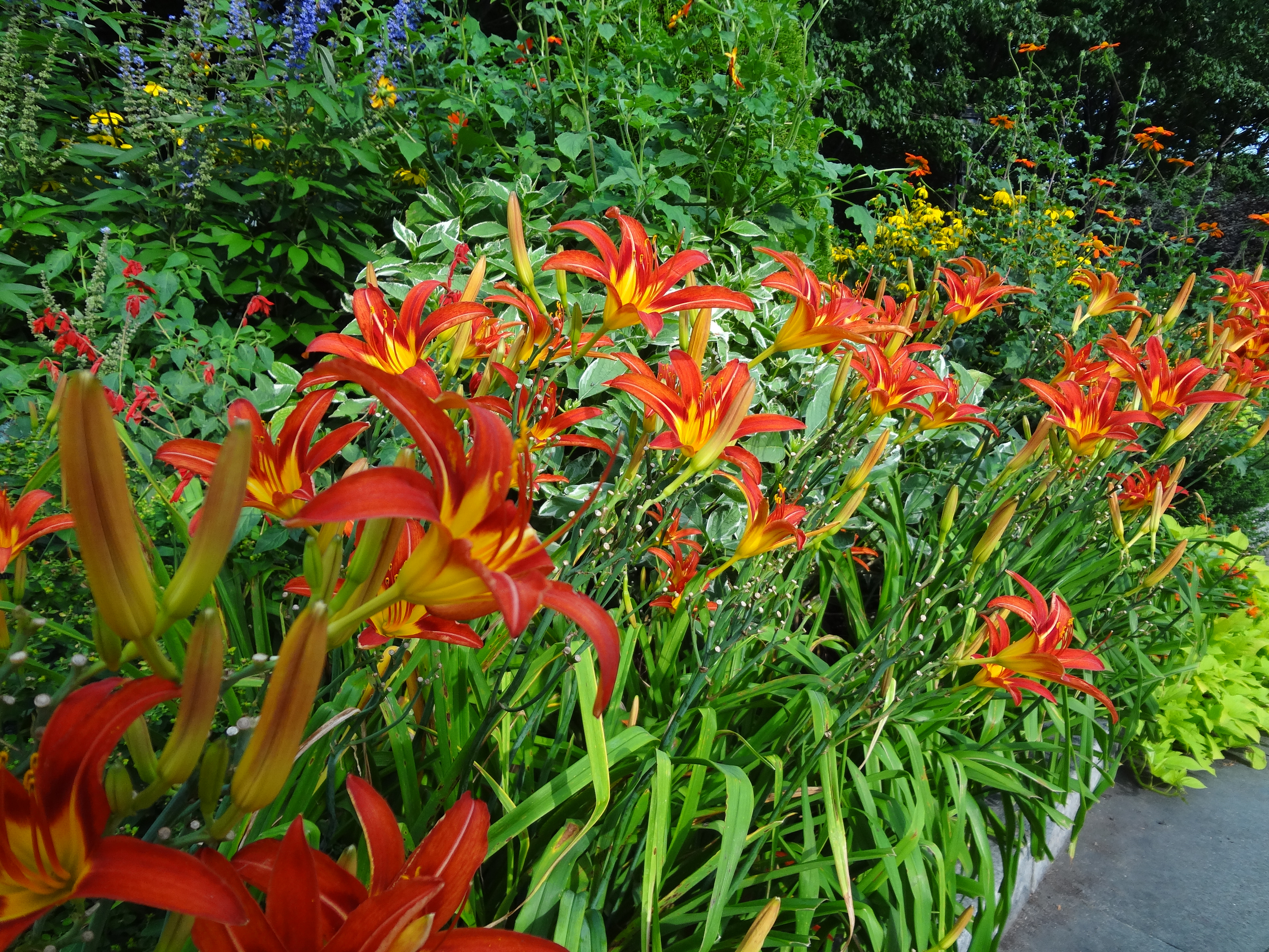 Wagner lillies