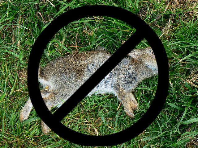 No Dead Rabbit