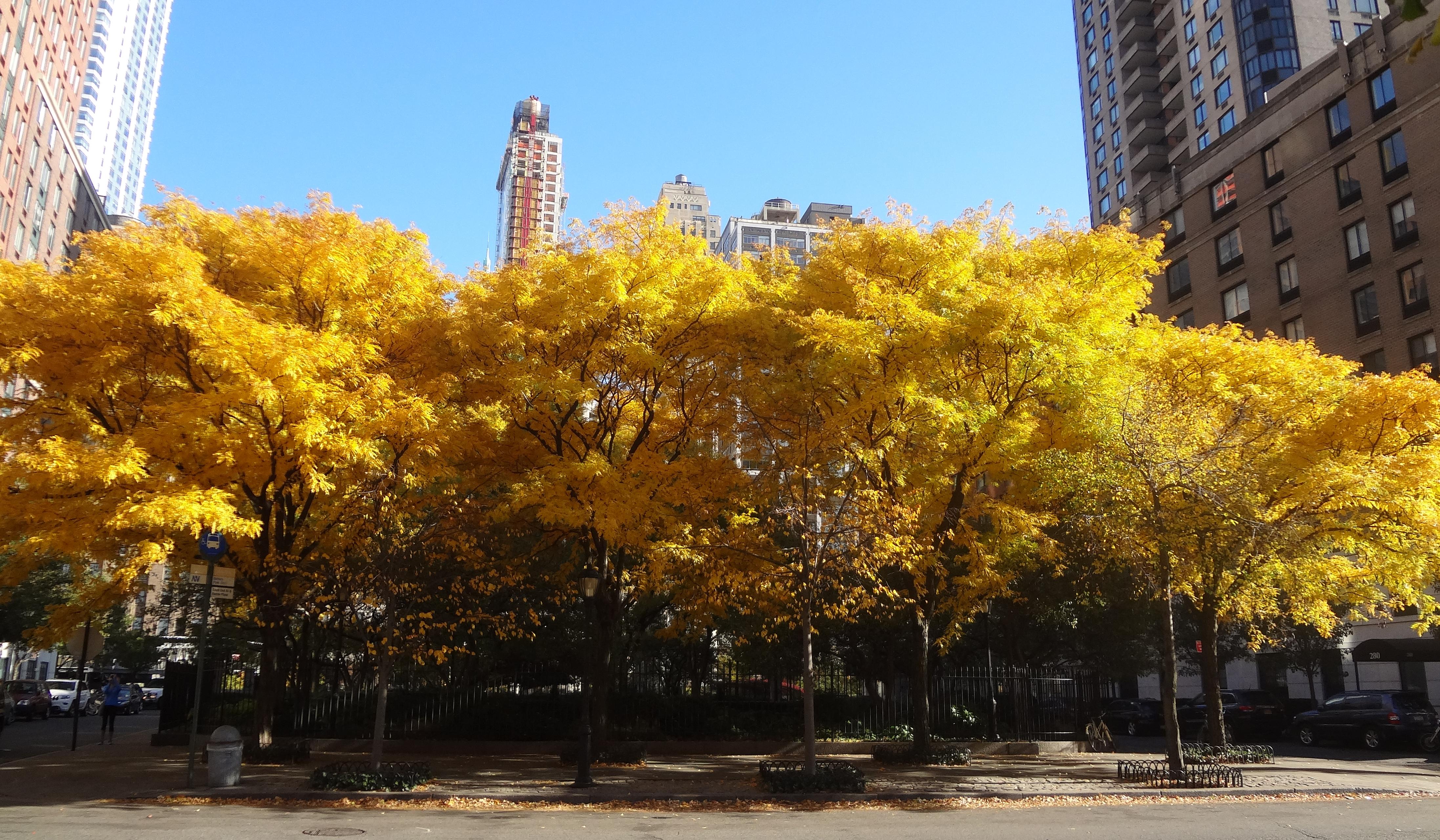Rector yellow trees