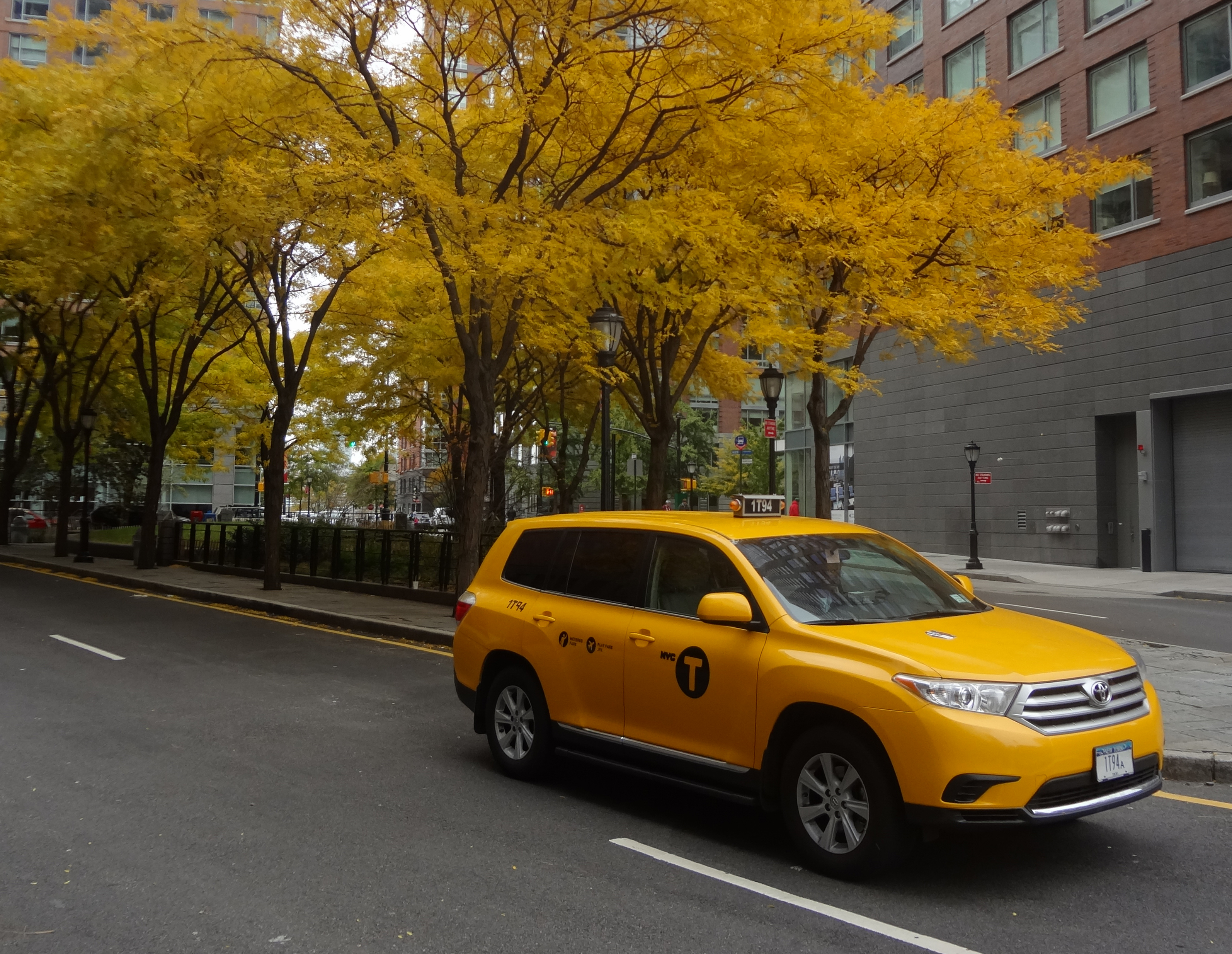 Yellow taxi and locust trees