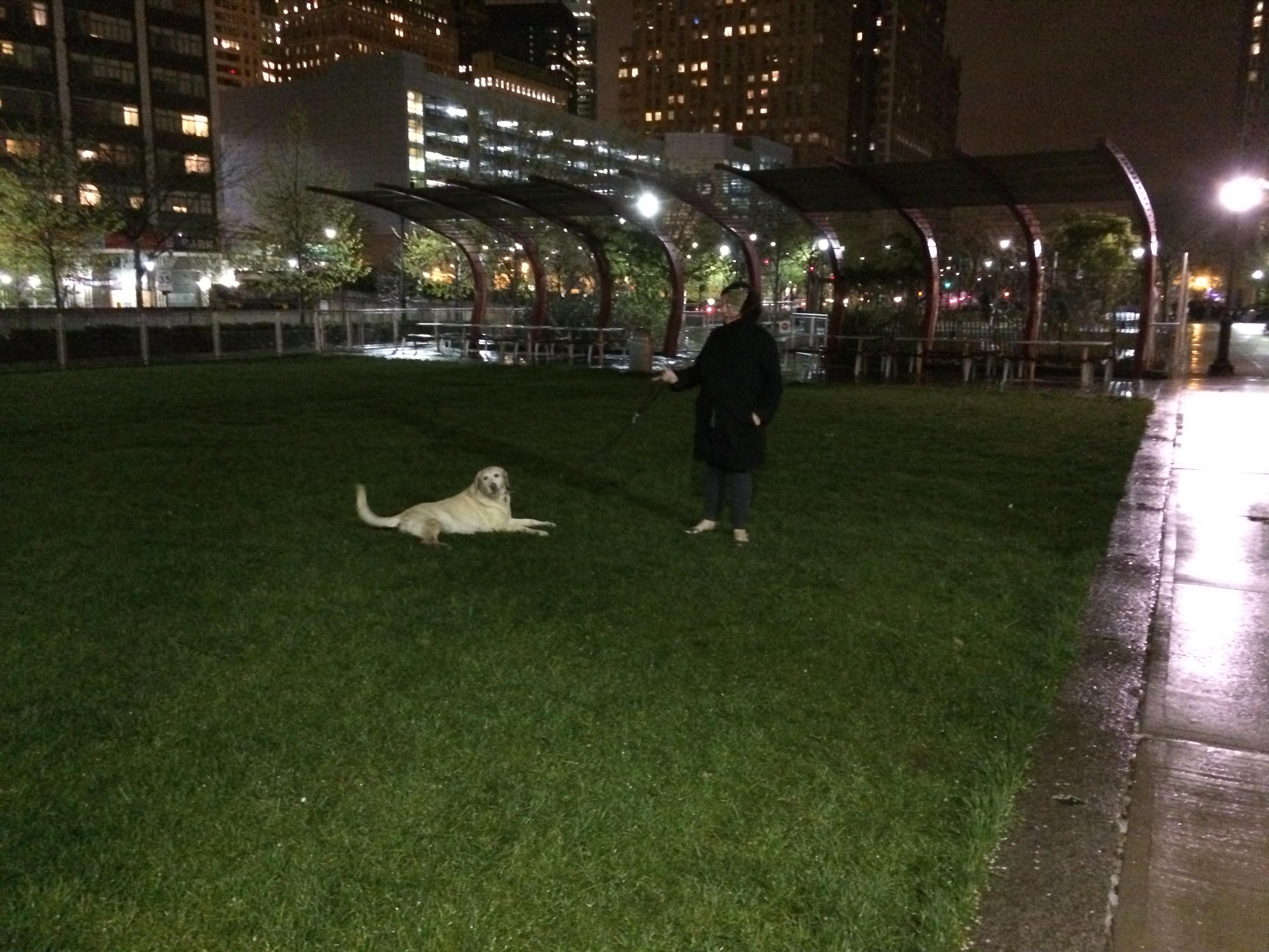 Dog on West Thames park