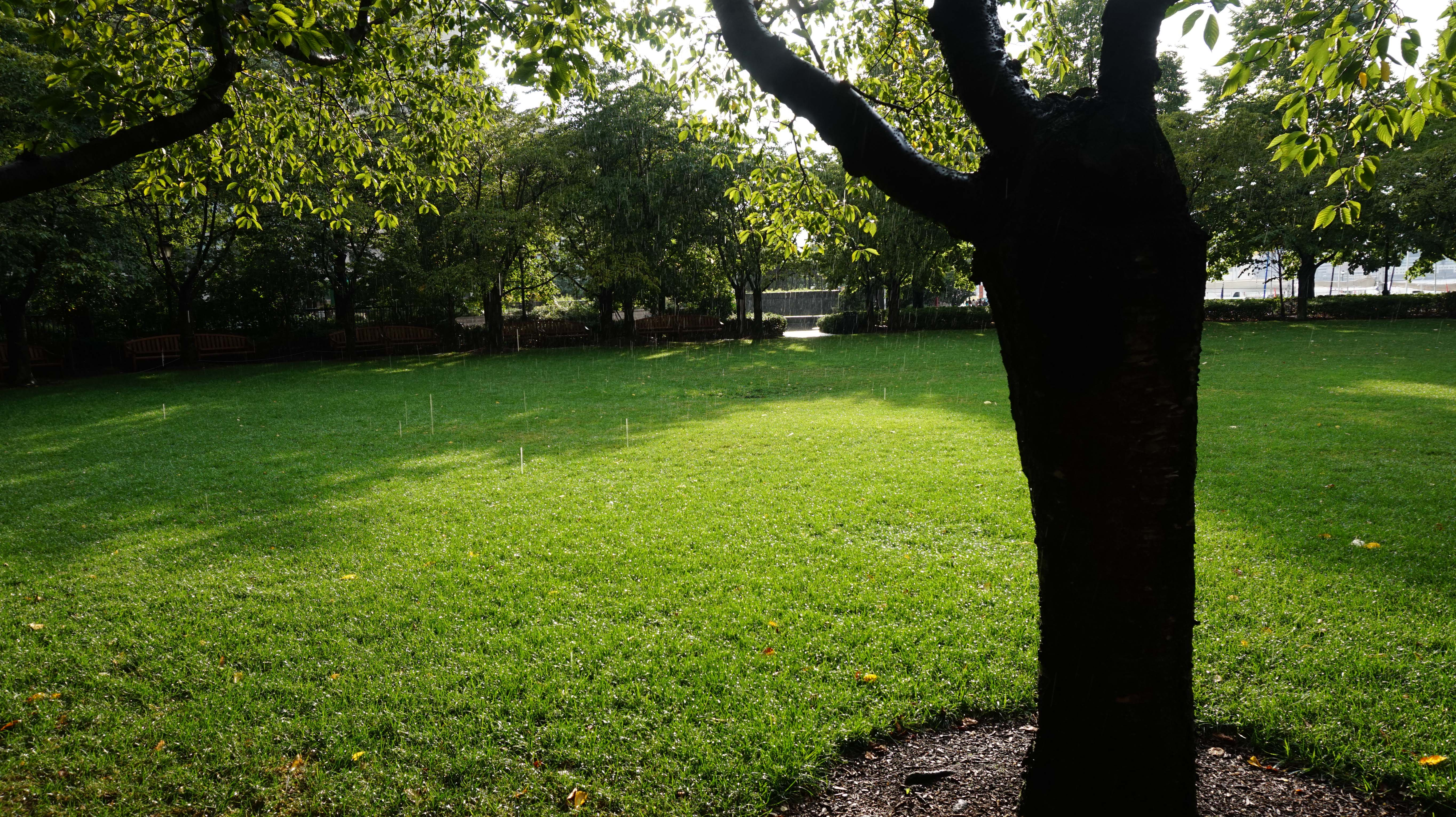 Rain in Cherry Tree lawn