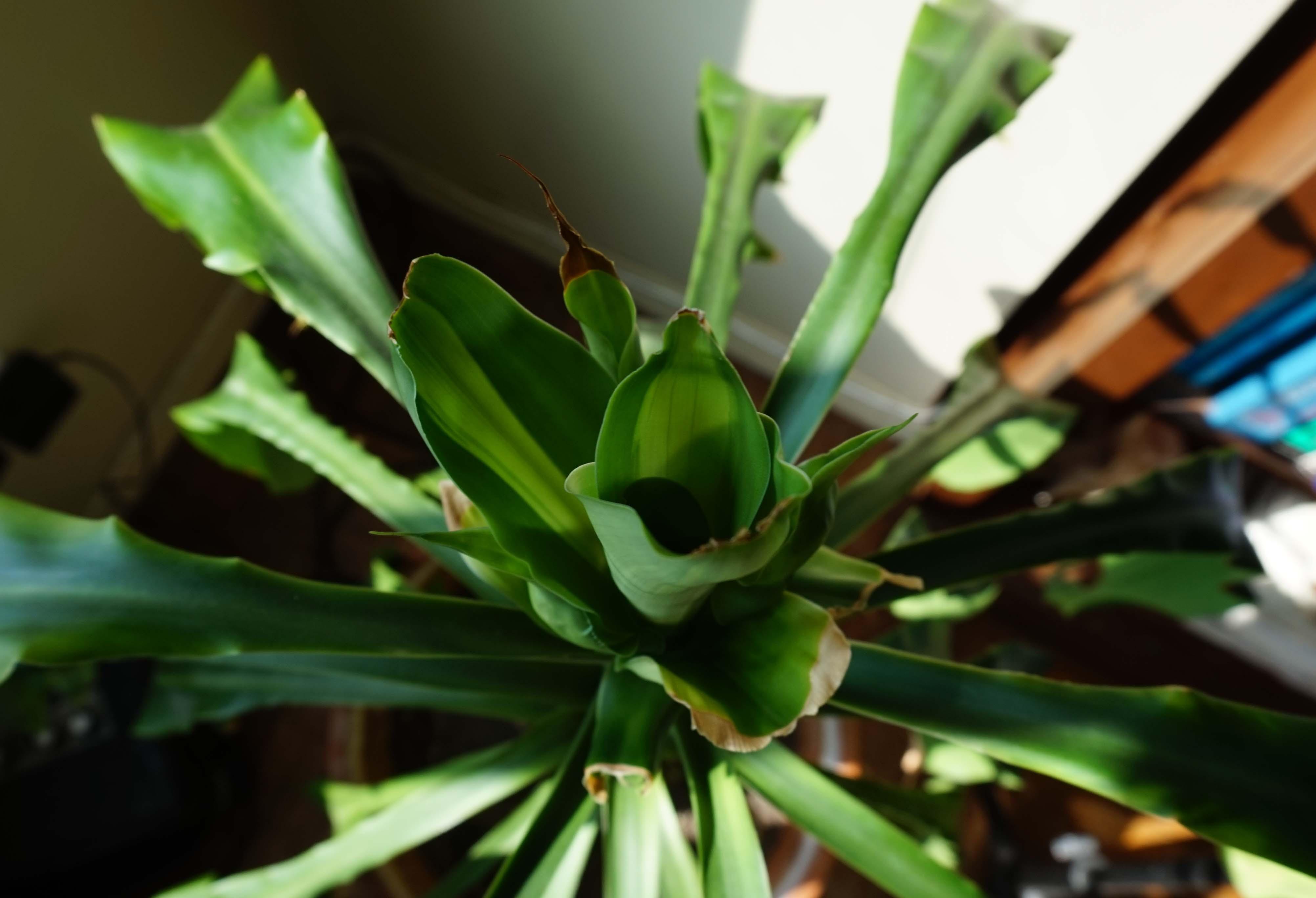 Plant top