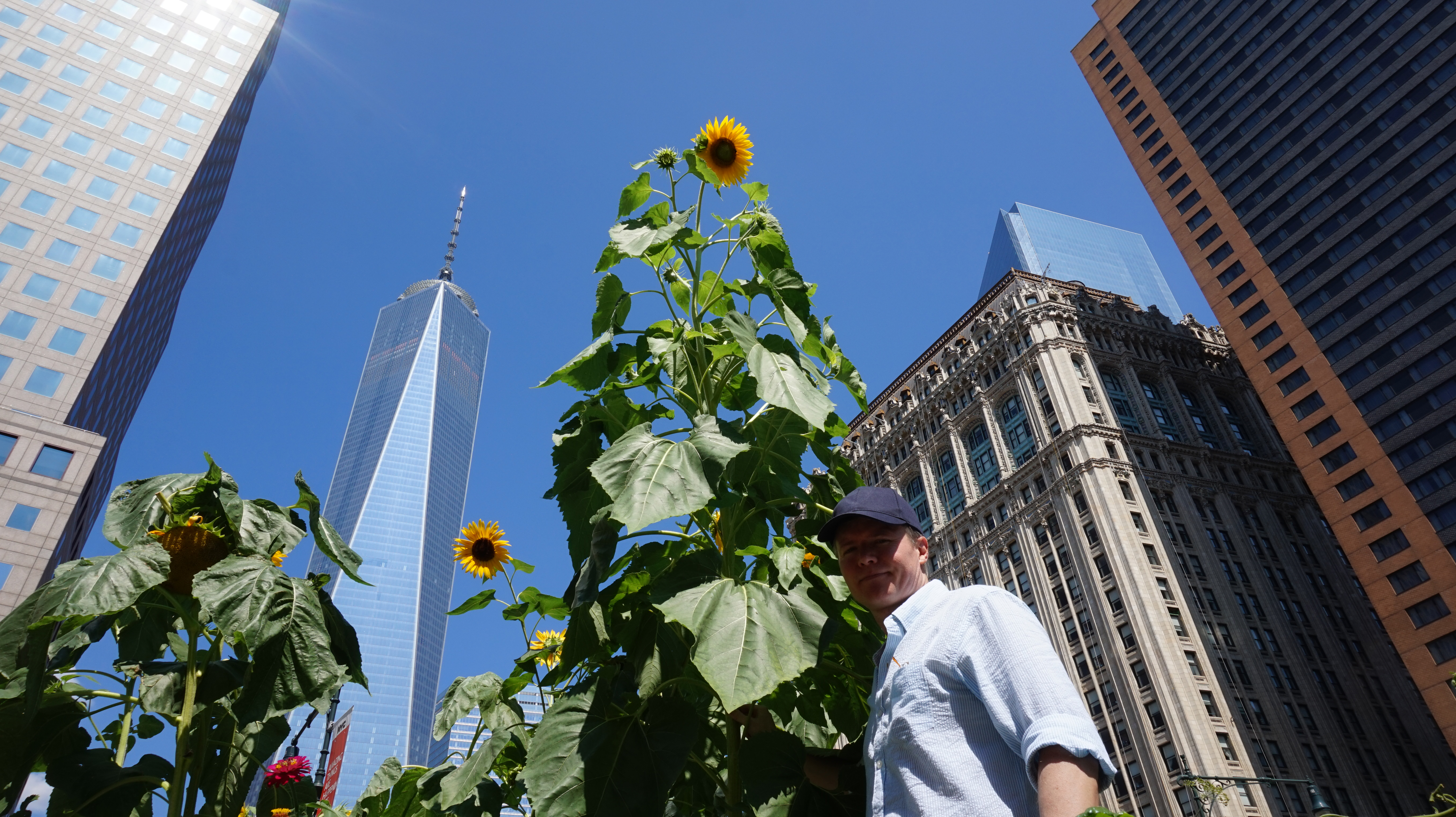 Me and sunflower looking up 8-25-2014