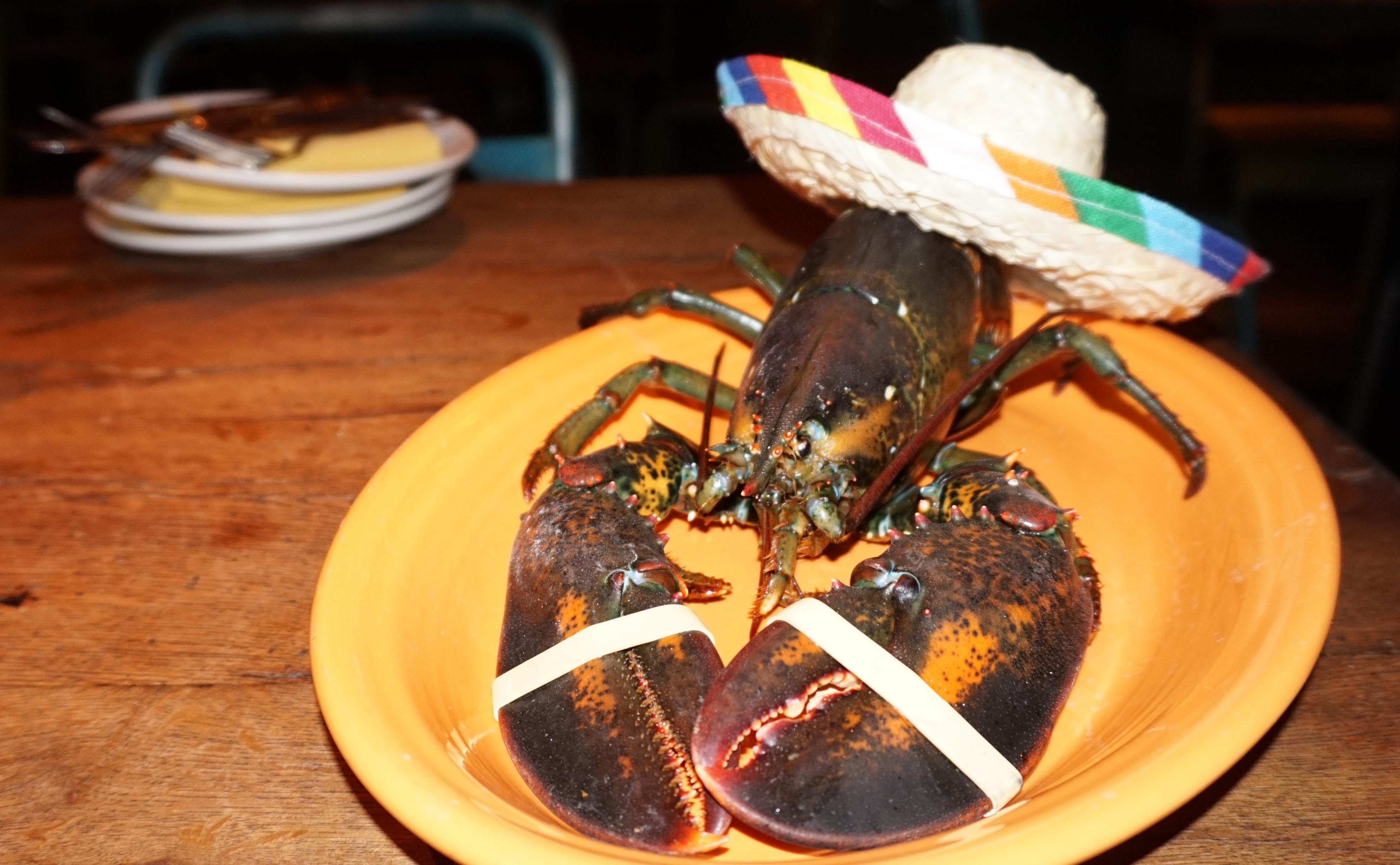 New Year's Eve lobster at El Vez 2014