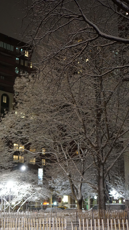 snow on trees portrait 3-20-2015