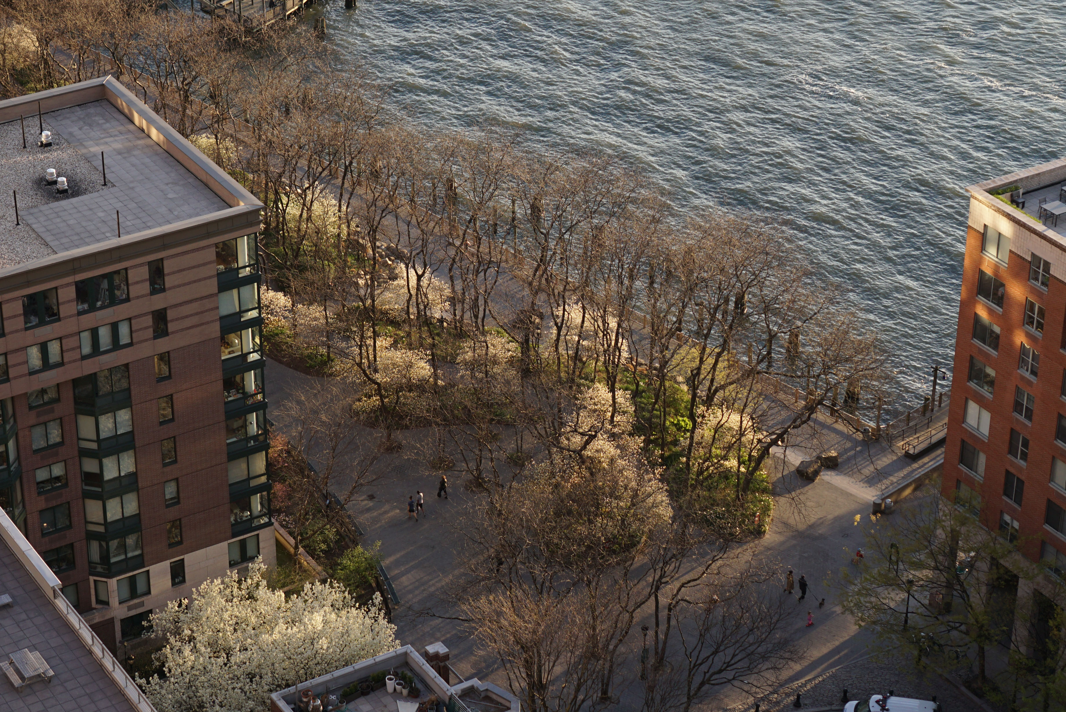 Flowering trees in South Cove Battery Park
