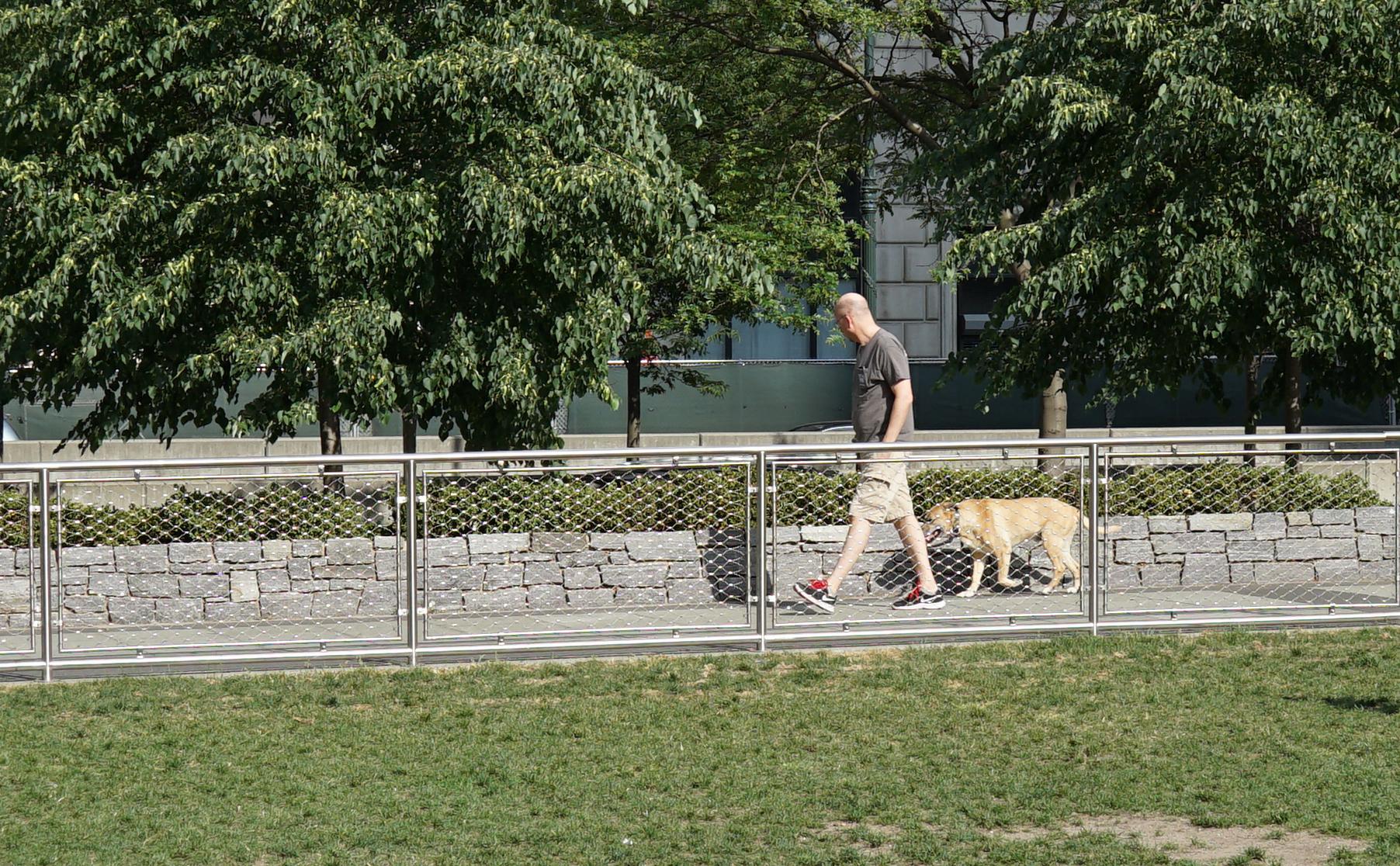 Dog on walkway by grass field