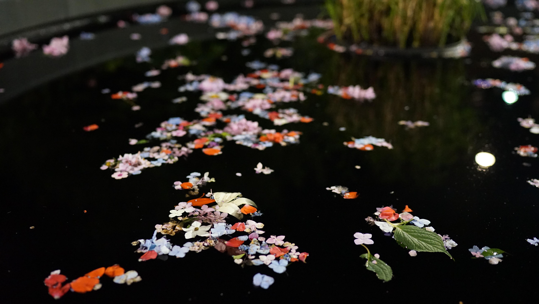 Flower petals on pool