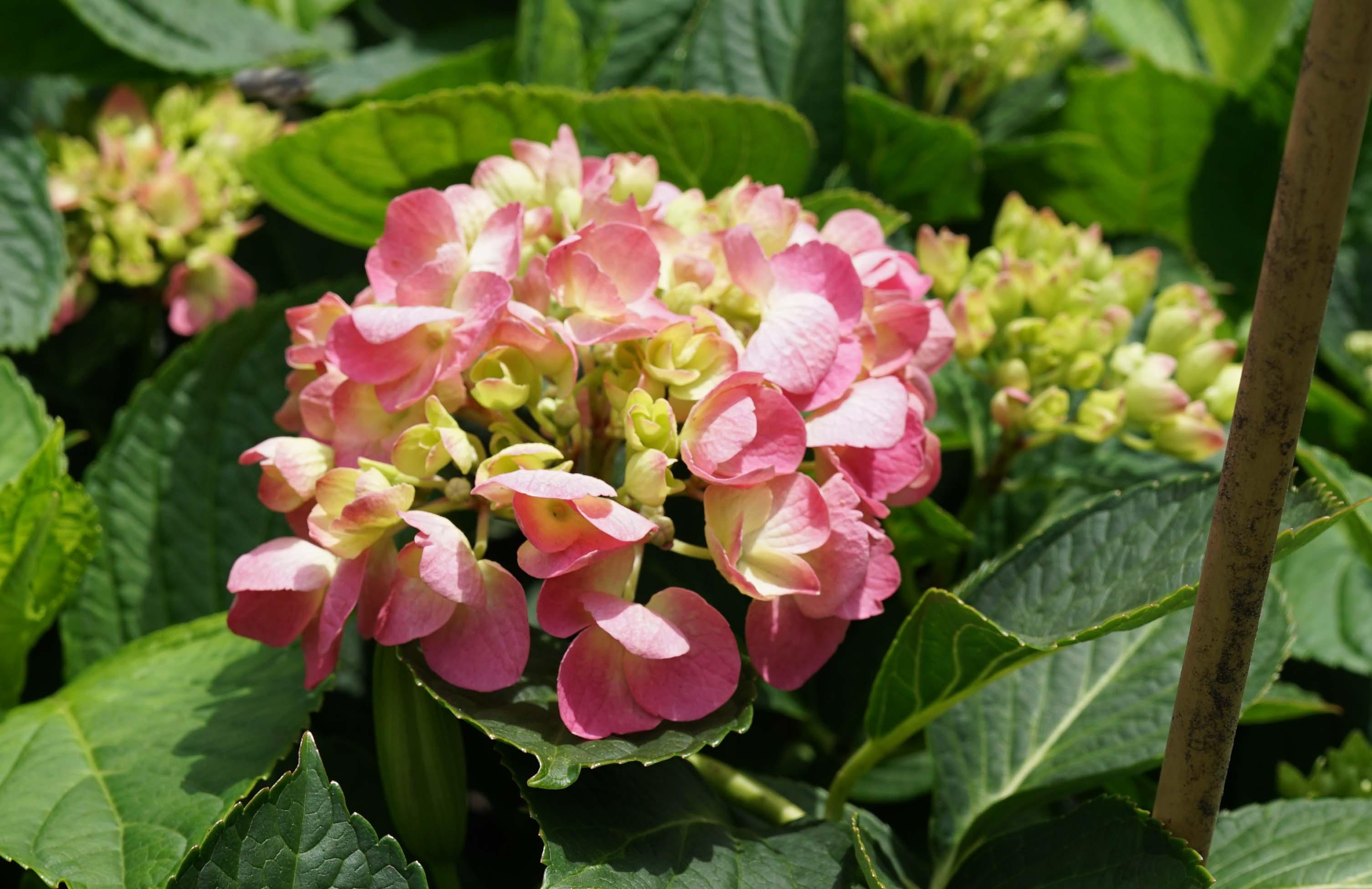 Garden small pink flowers