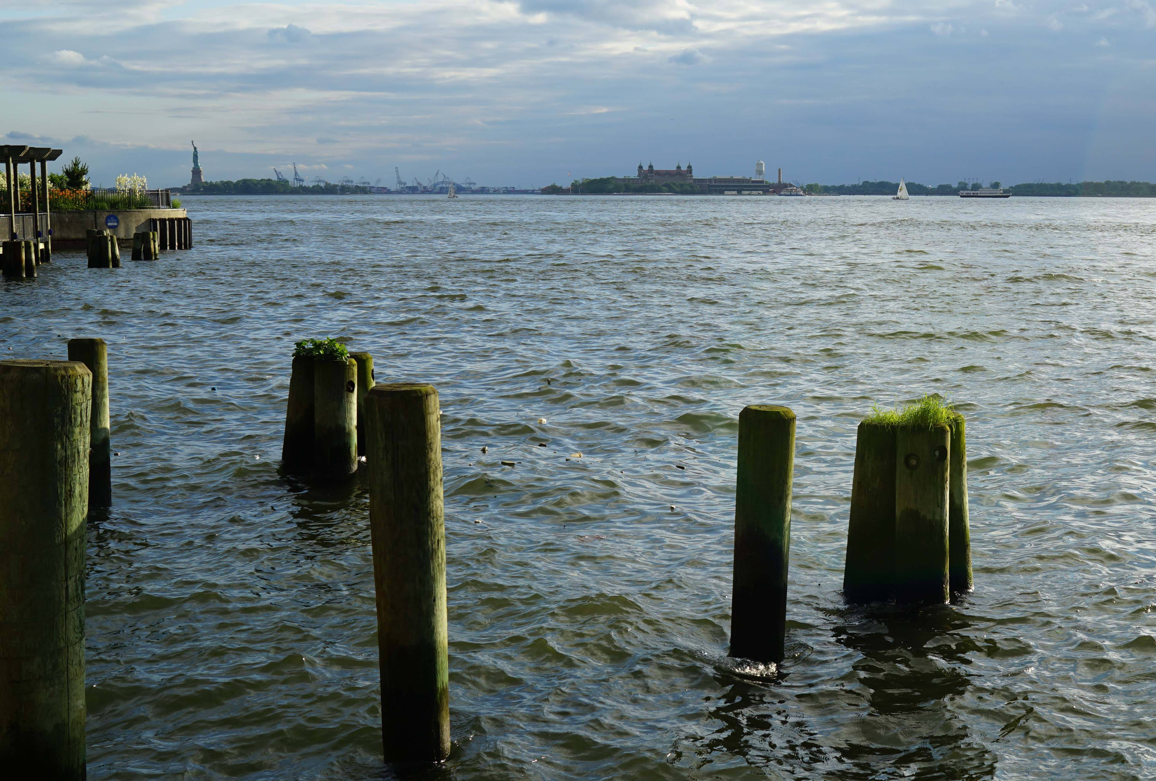 South Cove piles with grass on them 6-28-2015