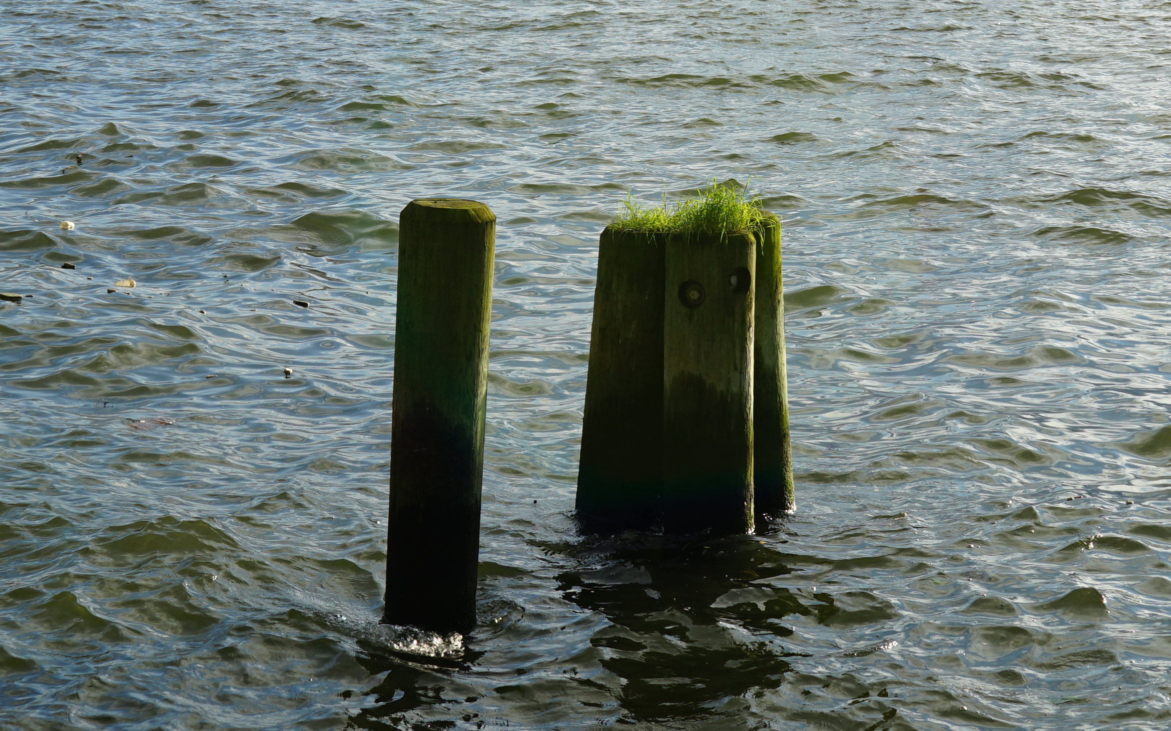 South Cove piles with grass zoom