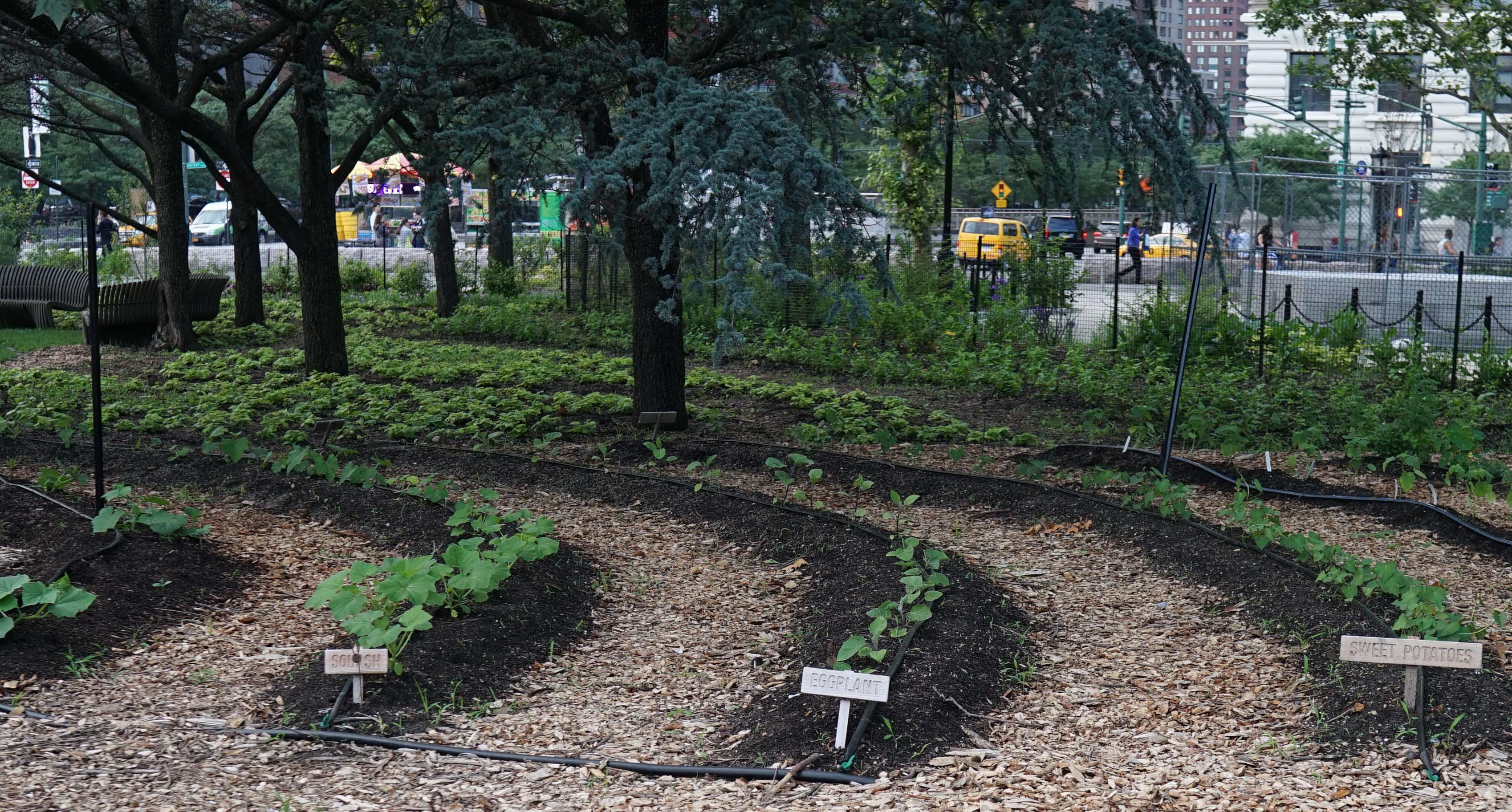 The Battery garden rows