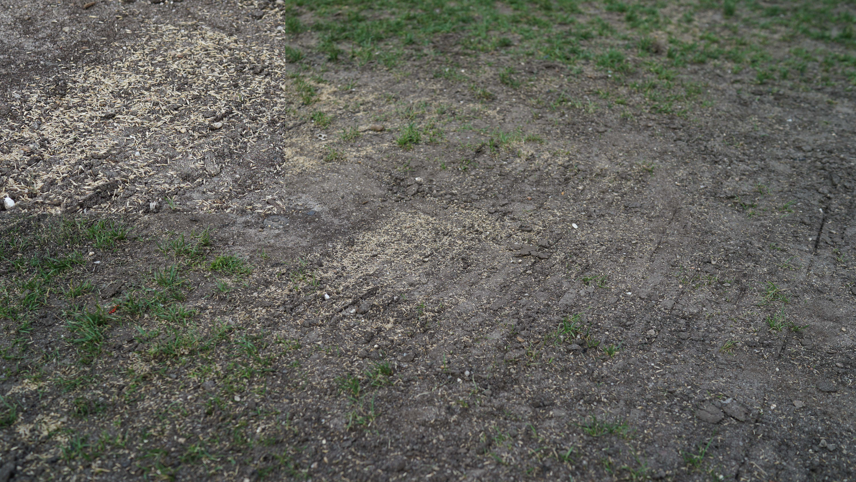 West Thames grass field grass seed 6-11-2015