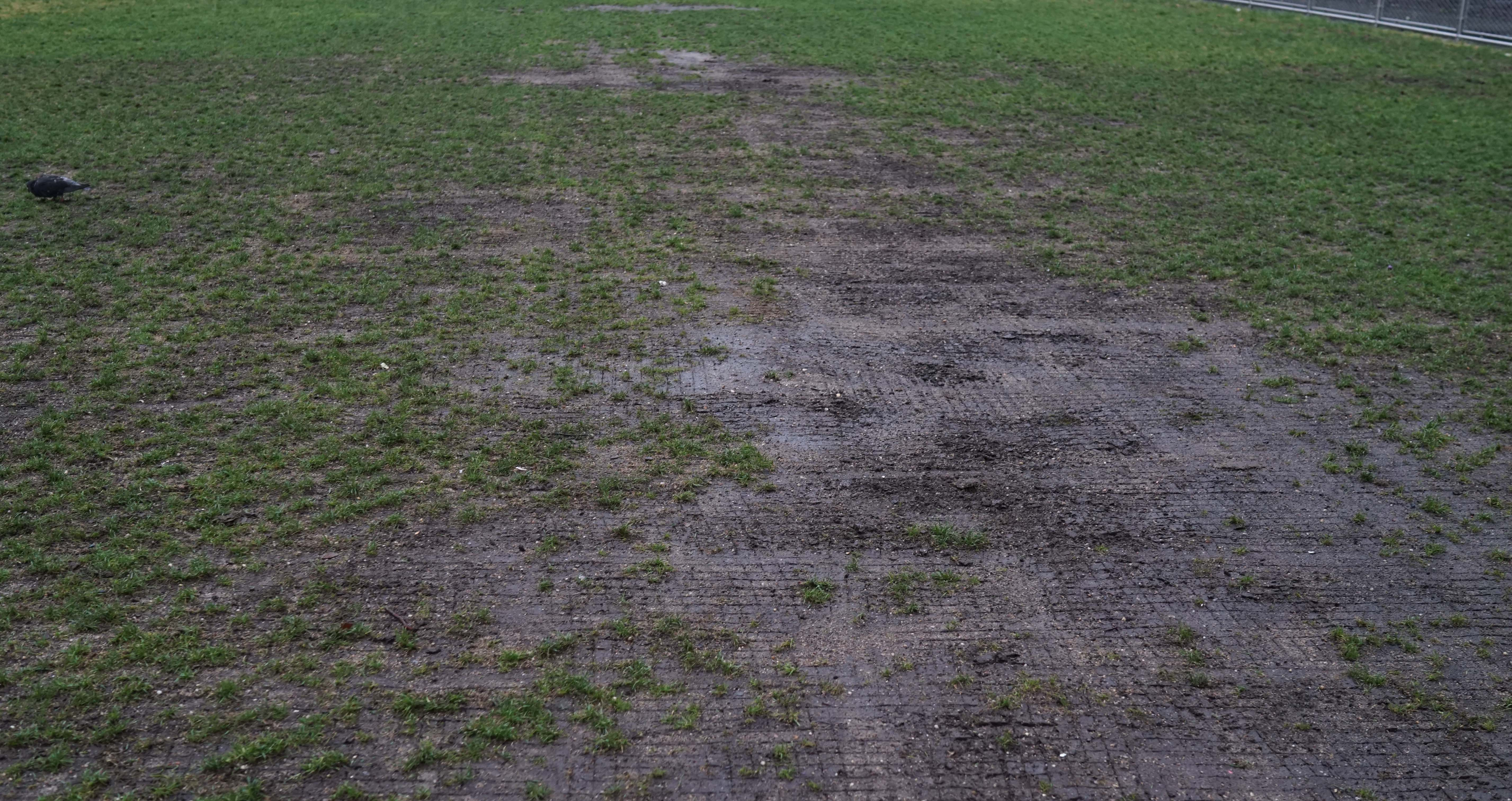 West Thames mud grass field A
