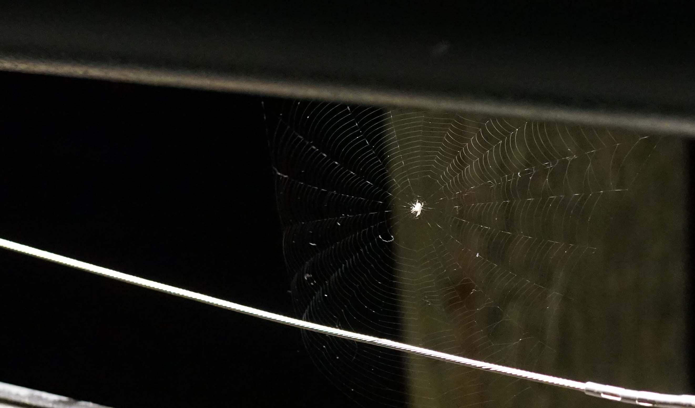 Pier A spider 1