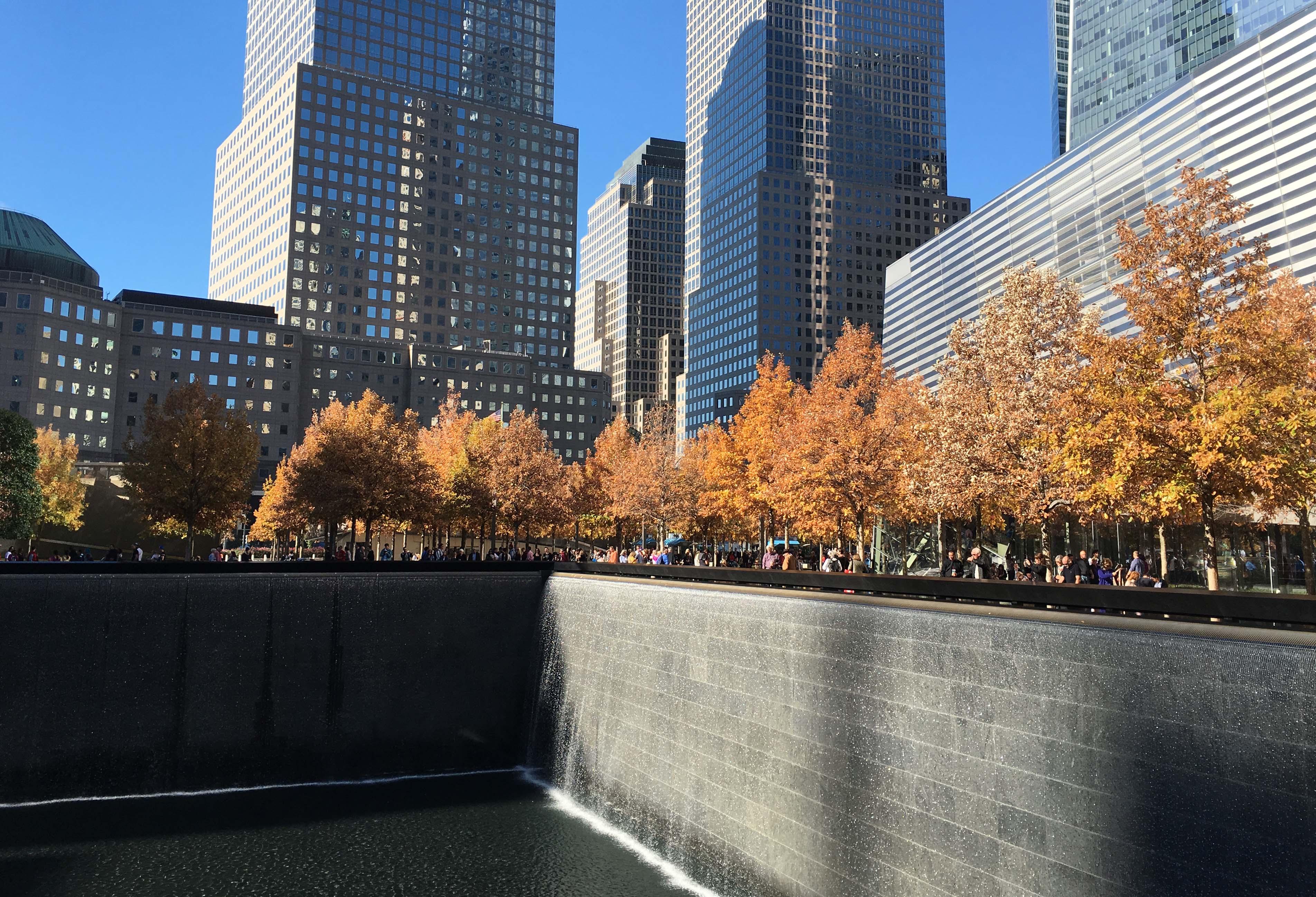 Oak trees 911 memorial 2015
