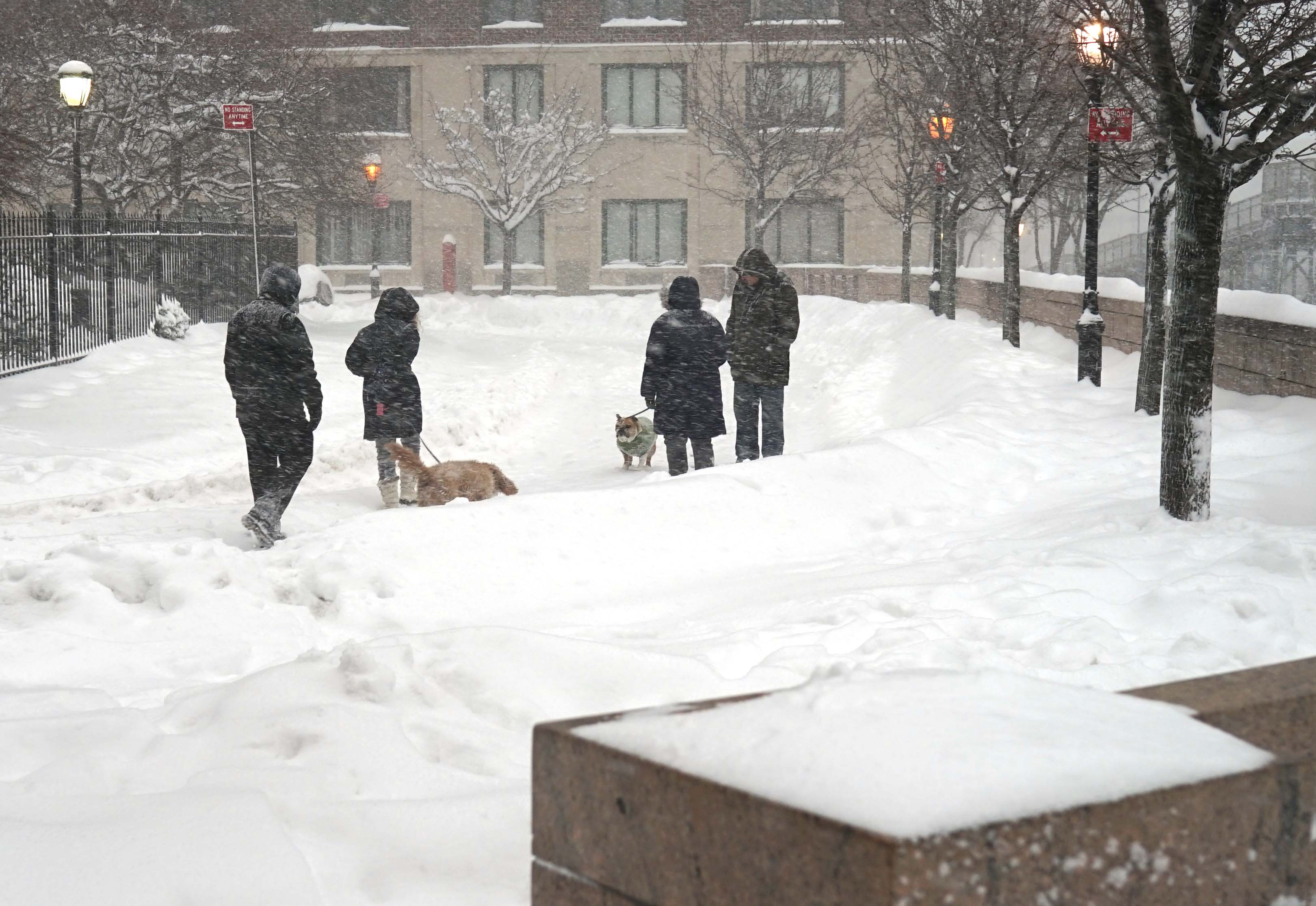 Snowfall dogs 1-23-2016