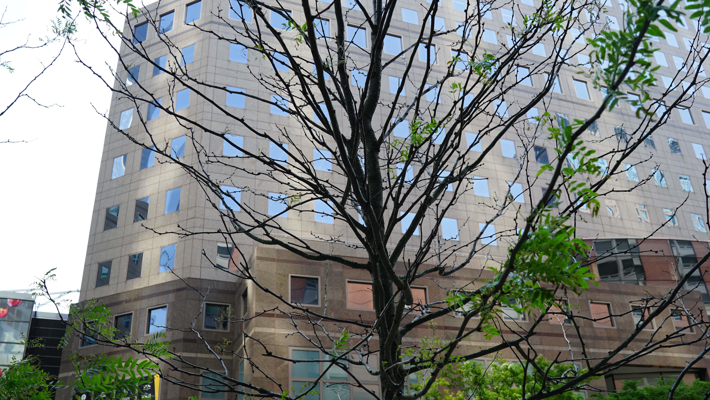 Dead trees on vesey 2016 B