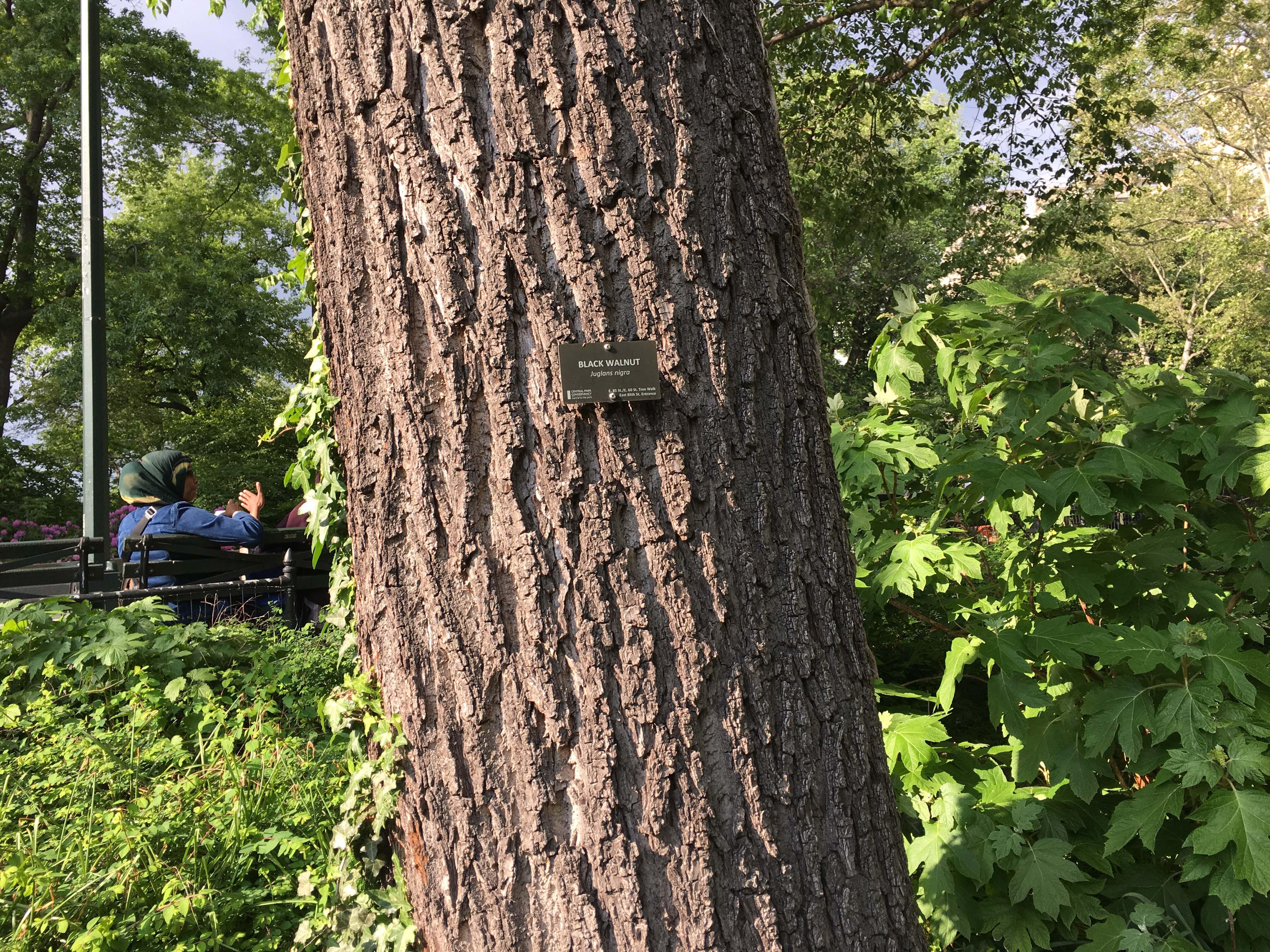 central park black walnut