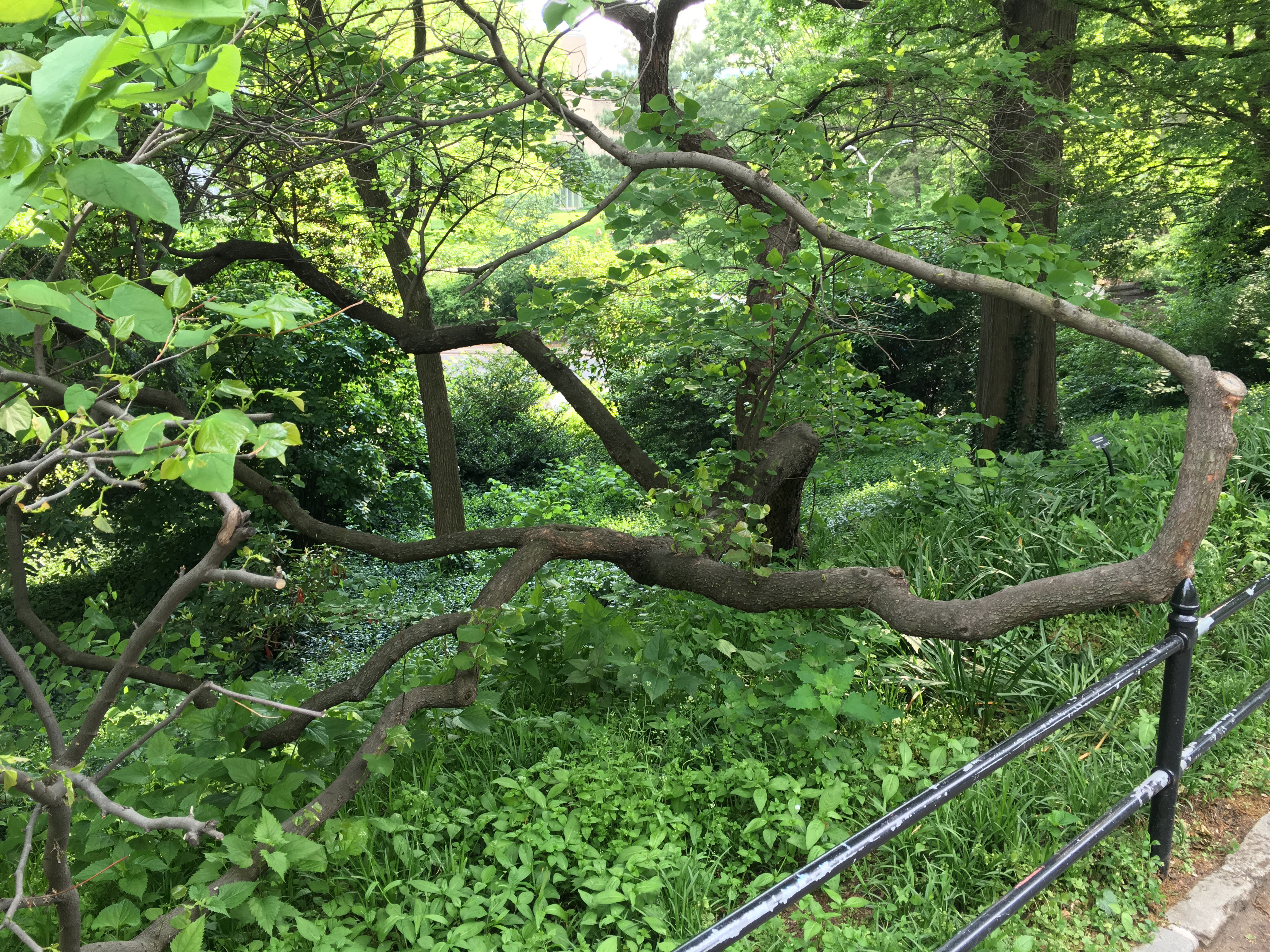 central park winding branch