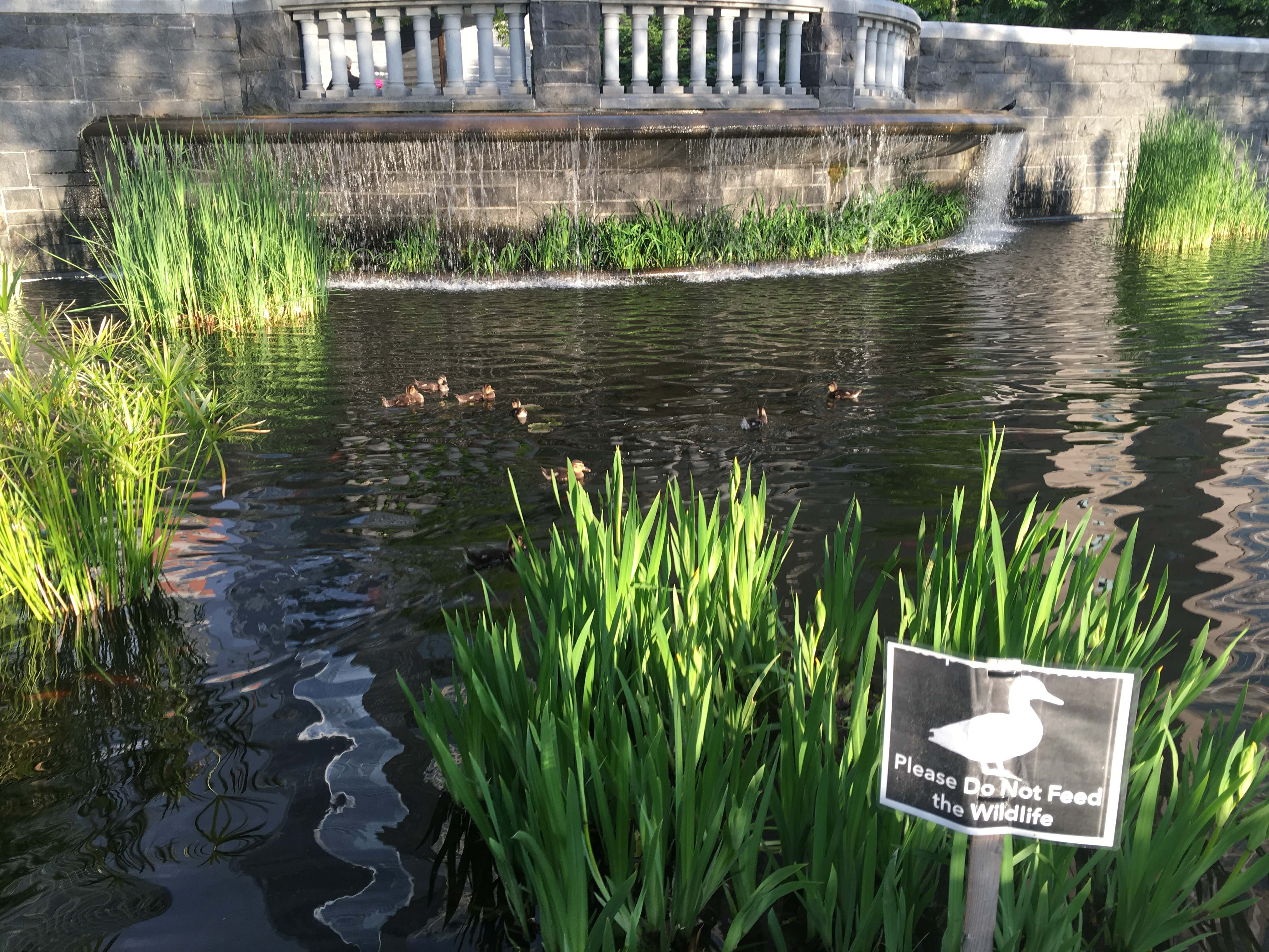 do not feed ducks sign