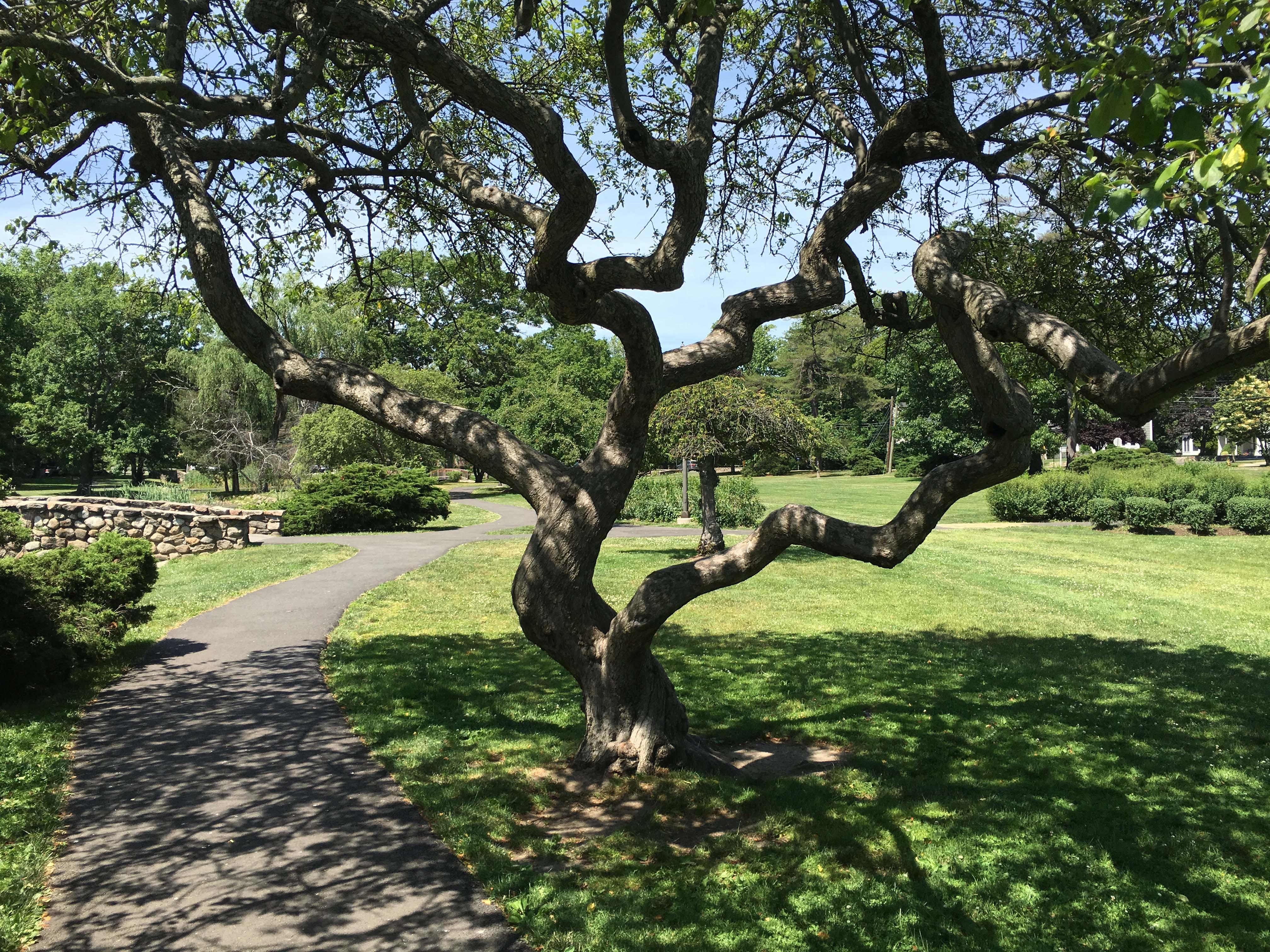 twist tree park old greenwich