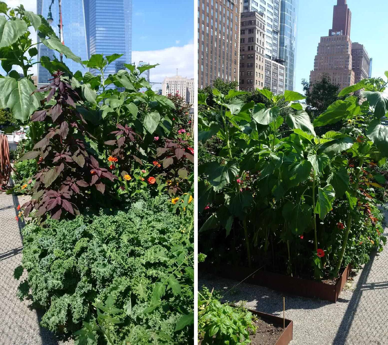 NY Garden 7-20-2016