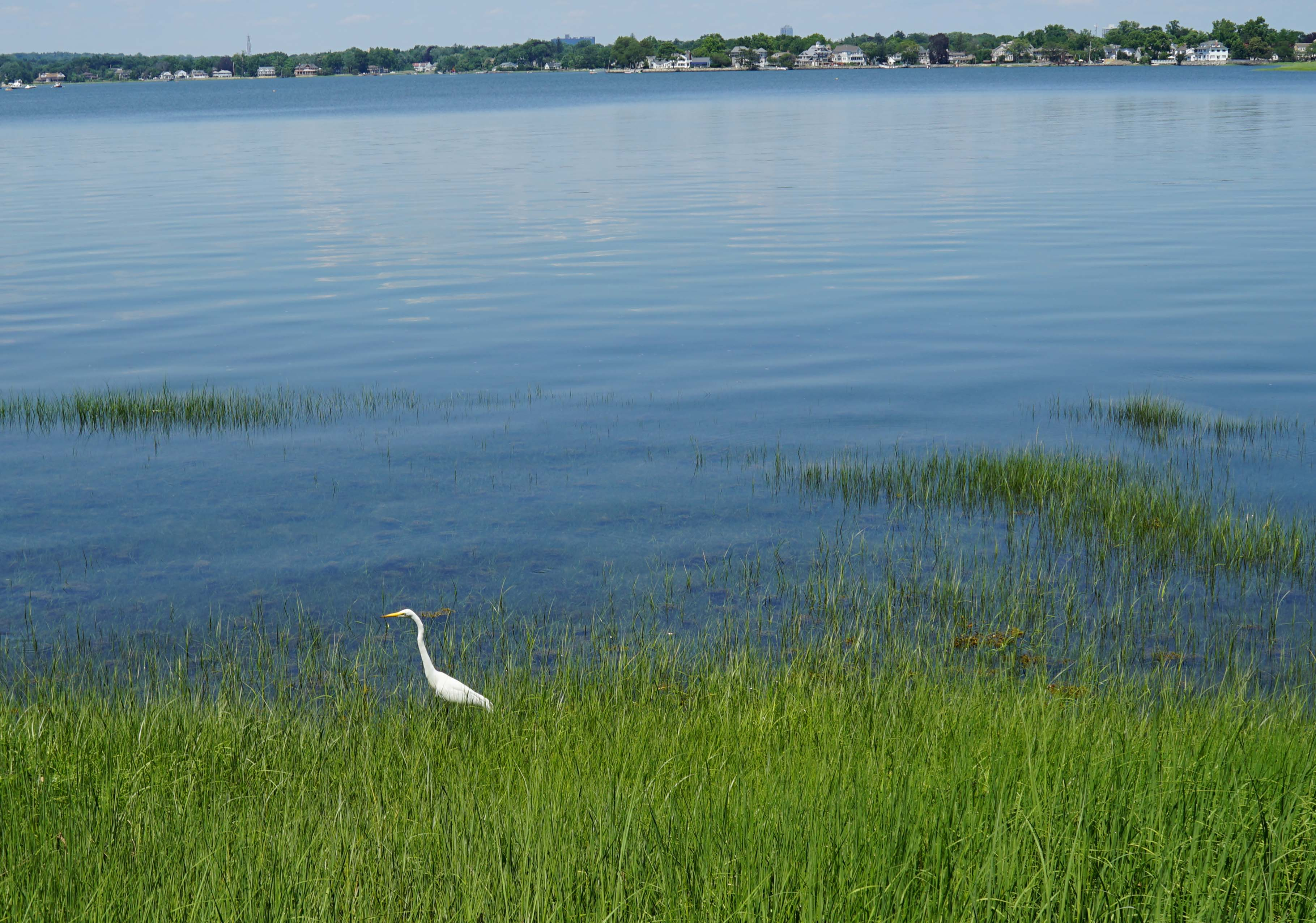Tods point crane