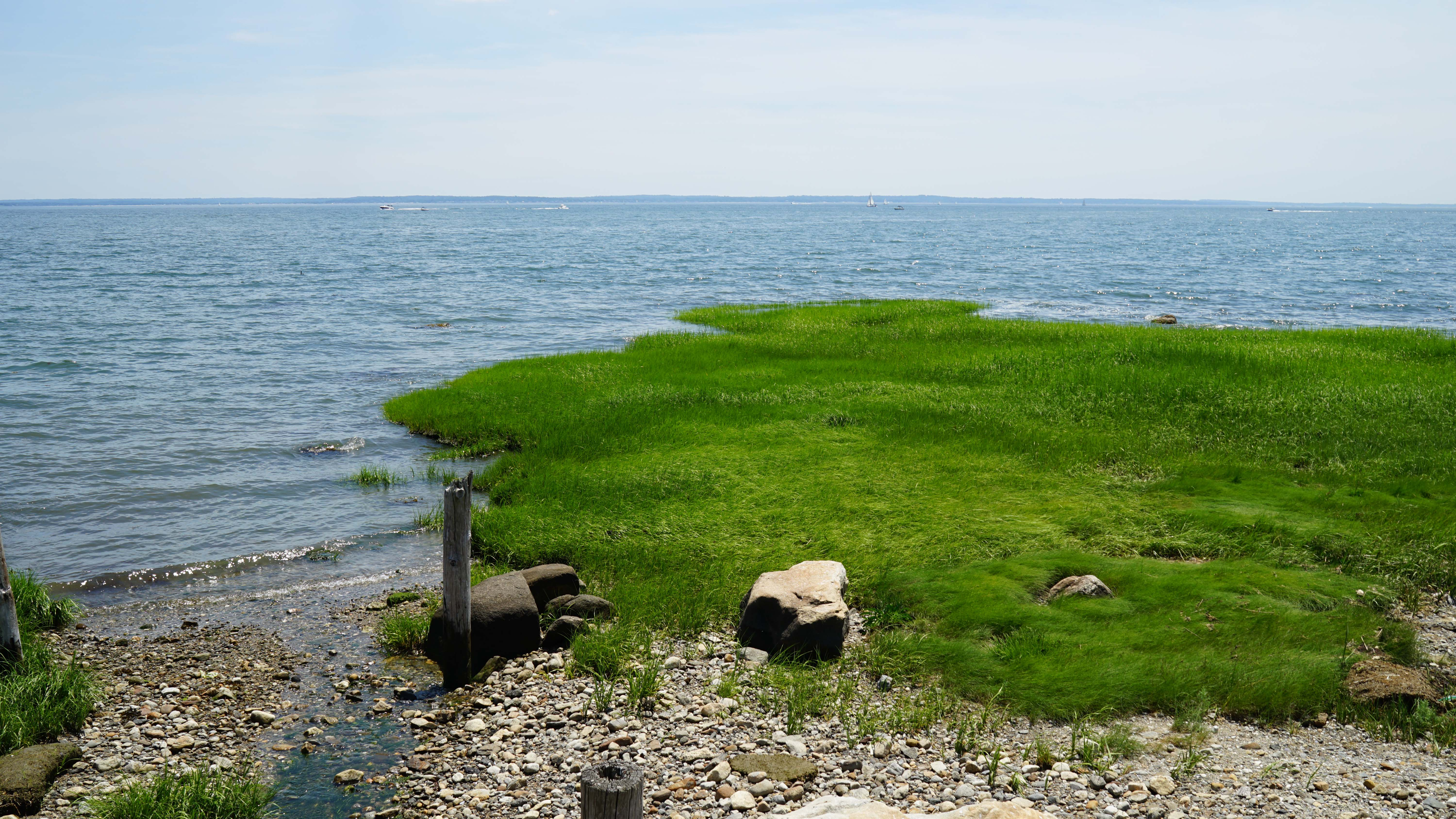 tods point sea grass
